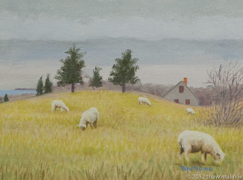 """Sheep, Allen Farm"""